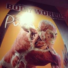 body worlds exhibit