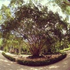 gargantuan tree